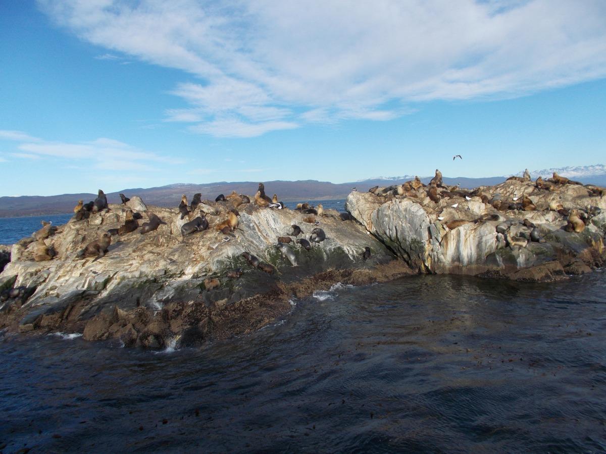 Seals just off the coast of Ushuaia